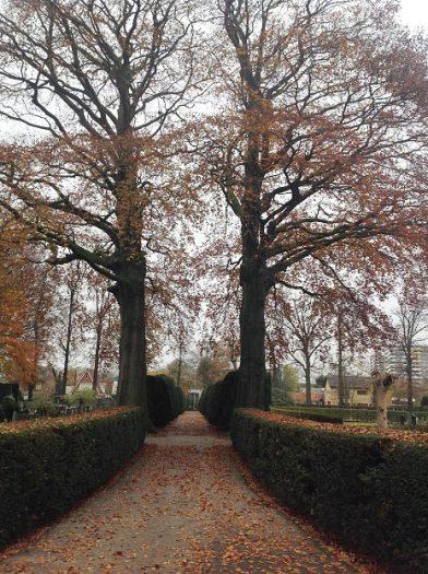 bomen begraafplaats