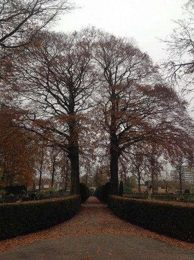 bomen-begraafplaats